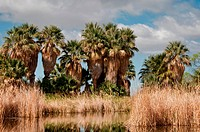 Agua Caliente Regional Park, Tuscon, Arizona.