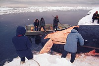 Men butchering whale in Gambell, Alaska.