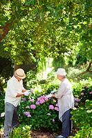 Man and a woman pruning flowers
