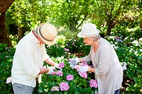 Woman helping a man prune flowers