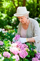 Woman looking at flowers as she prunes