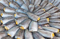 Dried salted snake skin gourami fish on Thailand market
