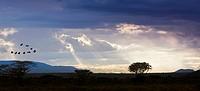 View of the Samburu National Park at dusk, Samburu National Reserve, Kenya, East Africa, PublicGround