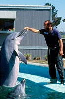Trainer feeding dolphin at Marine World, Vallejo, California.