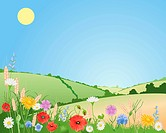 vector illustration of summer wildflowers in a beautiful landscape with poppies daisies cornflowers harebells corncockles and wheat under a blue sky i...