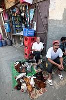 venditori di polli nella medina fes, marocco, magreb, africa