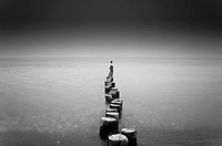 Old wooden groynes on a beach on the Baltic Sea, Prerow, Mecklenburg_Western Pomerania, Germany, Europe, Black, black_and_white, white