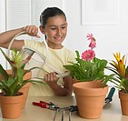 Hispanic girl watering potted plant indoors