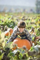 Pacific Islander boy trying to lift large pumpkin in pumpkin patch