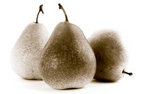 Three pears on a white background. Sepia toned.