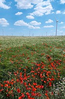 group of windmills for electric power production and poppies