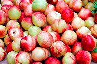 Big pile of fresh organically grown nectarines