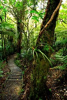 Trail in tropical forest