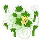 illustration, green cucumber on branch on white background