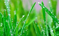 Blade of grass and water droplet. Macro.