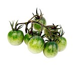 Bunch of green tomatoes on the white background