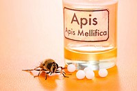 Apis Mellifica homeopathic pills, poison extract and the real bee on yellow background