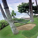 A hammock hanging from two palm trees, Maui, Hawaii