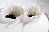 Blackberries falling into milk