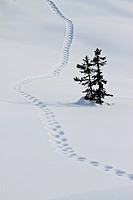 Footstep trail on snow