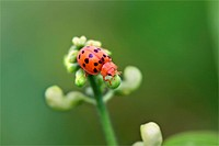 close up shot of young lady bug on a plant