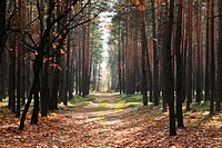 Autumn forest in central Poland at November