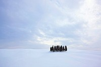 Group of cypress trees Cupressus in the snow, San Quirico d´Orcia, Tuscany, Italy, Europe