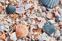 Beach background with sand and sea shells