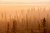 Sunrise over a foggy forest, Katmai National Park and Preserve, Southwest Alaska, Autum