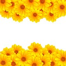 Beautiful yellow flower stripes over white background