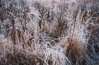 Field with plants covered in ice crystals