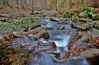 Ilse stream in the Ilsetal valley in autumn, Saxony-Anhalt, Germany, Europe