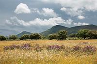 Landscape in Mesas de Ibor  Cáceres province  Extremadura  Spain