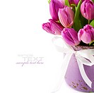 Pink tulips on white background with easy removable sample text