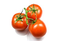 Bunch of red trussed tomatoes on white background