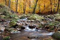 Ilse river in autumn, Ilsetal valley, Ilsenburg, Harz region, National Park Harz, Saxony-Anhalt, Germany, Europe, PublicGround