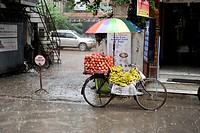 Mobile apple and banana stand during monsoon rain in the tourist district of Thamel, Kathmandu, Bagmati, Nepal, South Asia, Asia