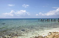 Seaguls on brakewaters on tropical coast of Cuba