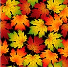 Seamless pattern from autumn leavescan be repeated and scaled in any size