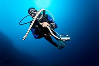 Scuba diver catching and looking at Colubrine Sea Krait (Laticauda colubrina), in blue water, Great Barrier Reef, UNESCO World Heritage Site, Cairns, ...