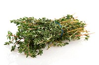 Bunch of fresh Thyme isolated over white