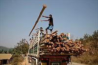 Builders unload logs to build more refugee homes Around 130,000 Burmese refugees have settled in Thailand due to opression in their homeland of Myanma...
