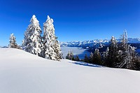 Alp, Alps, view, mountain, mountains, mountain, mountain panorama, Bernese Alps, mountains, Glarus Alps, sky, light, sea, fog, sea of fog, panorama, R...