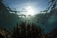 Tropical Coral Reef Scene With Fish