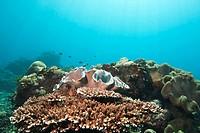 Sea Life Underwater