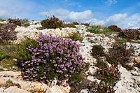 Qrendi Village coastline, Malta Island, Malta, Europe.
