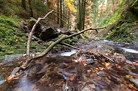 Waterfall in the Ravennaschlucht gorge in autumn, Breisgau-Hochschwarzwald district, Baden-Wuerttemberg, Germany, Europe