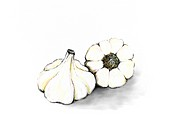 Illustration of garlic bulbs on white background