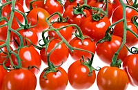 Tomatoes are put by numbers on branches