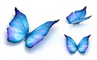 Blue butterfly isolated on white. 3d render